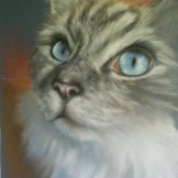 Pablo - pastel on paper. FOR SALE