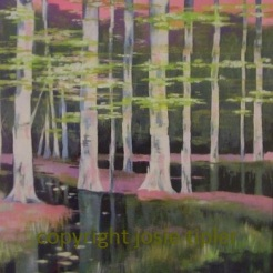 silver birches - acrylic on canvas board. SOLD