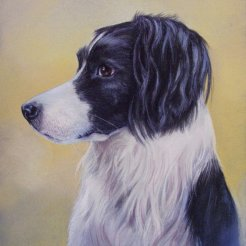 Missy commission in Chalk pastel (from owner's photos)- sold