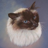 Cat commission in Chalk pastel - sold