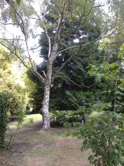 pickhams garden 5