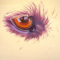 Gallery-ANIMALS-200